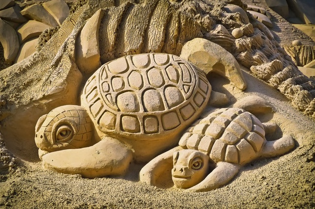 turtles and forgiveness